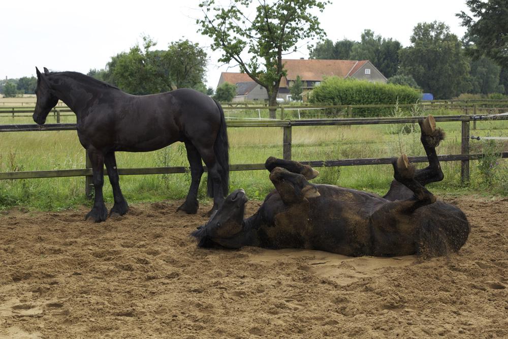 Image result for Berühmte Pferde
