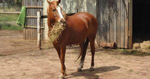 horse-164914_640-640x337