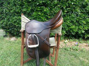 horse-490704_1280-1024x768