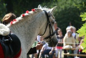 horse-661795_640-420x283