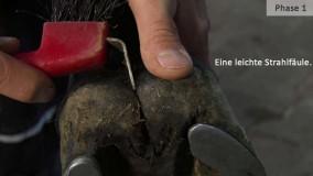 leichte-strahlfäule