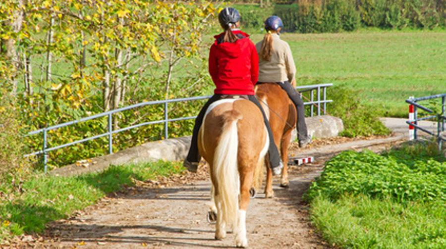 Wege zum Pferd