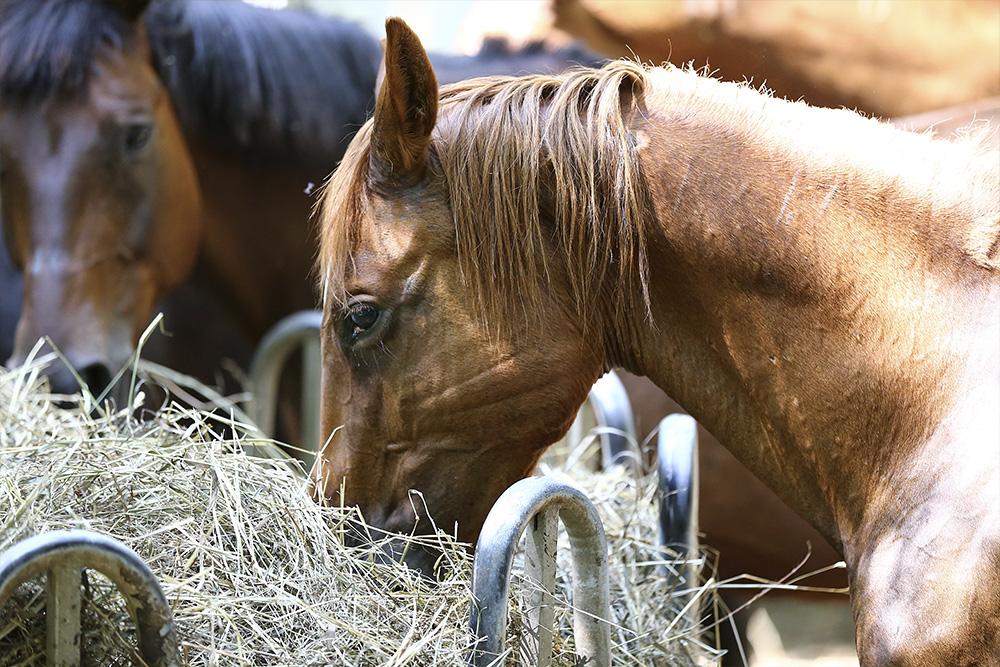 Hautpilze am Pferd